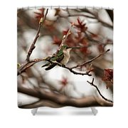 Hummingbird In Spring Shower Curtain