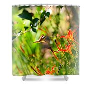 Hummingbird In The Daylilies Shower Curtain