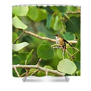 Hummingbird In Tree Shower Curtain