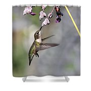 Hummingbird - Little Sipper Shower Curtain
