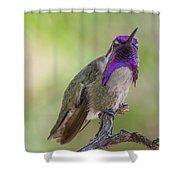 Hummingbird Male Costa Shower Curtain