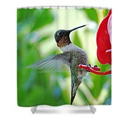 Hummingbird Male Ruby Throated  Shower Curtain