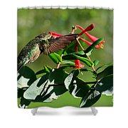 Hummingbird Morning Shower Curtain