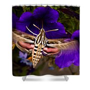 Hummingbird Moth   #8612 Shower Curtain