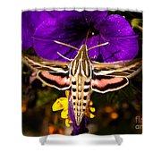 Hummingbird Moth   #8645 Shower Curtain