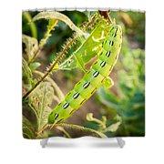 Hummingbird Moth Caterpillar Shower Curtain