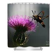 Hummingbird Moth II Shower Curtain