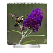 Hummingbird Moth Iv Shower Curtain
