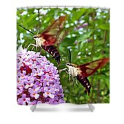 Hummingbird Moths Shower Curtain