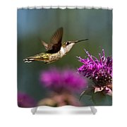 Hummingbird Moving Along Shower Curtain