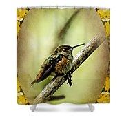 Hummingbird Noveau Shower Curtain