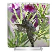 Hummingbird On A Desert Willow Shower Curtain