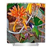 Hummingbird On Aloe In Living Desert In Palm Desert-california Shower Curtain