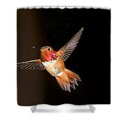 Hummingbird On Black Shower Curtain