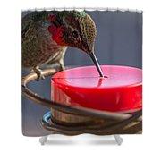 Hummingbird On Feeder Shower Curtain