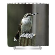 Hummingbird Perched Shower Curtain