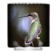 Hummingbird Photo - Side View Shower Curtain