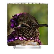 Hummingbird Portrait Shower Curtain
