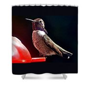 Hummingbird Posing On Perch Shower Curtain