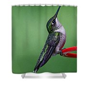 Hummingbird Profile Shower Curtain