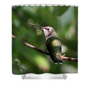 Hummingbird - Ruby-throated Hummingbird - Detail Shower Curtain