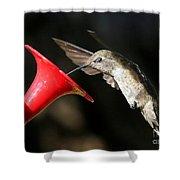 Hummingbird Sigh Shower Curtain