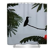 Hummingbird Silhouette Shower Curtain