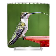 Hummingbird Sticky Her Tongue Out Shower Curtain