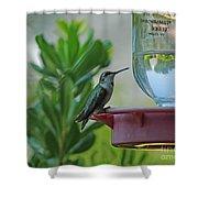 Hummingbird Still Life Shower Curtain