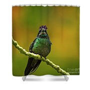 Hummingbird With A Lilac Crown Shower Curtain