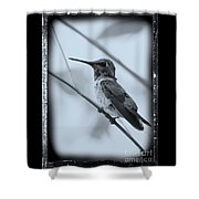 Hummingbird With Old-fashioned Frame 1 Shower Curtain