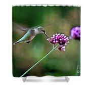 Hummingbird With Purple Verbena Shower Curtain