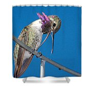 Hummingbird Yawn With Tongue Shower Curtain