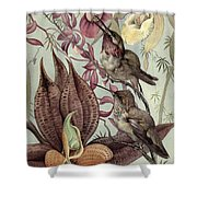 Hummingbirds And Orchids Shower Curtain