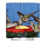 Hummingbirds At Feeder Shower Curtain