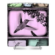Hummingbirds In Old Frames Collage Shower Curtain