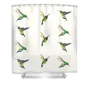 Hummingbirds Number 2 Shower Curtain