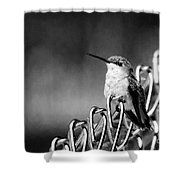 Hummy On Fence B And W Shower Curtain