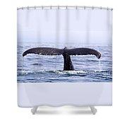 Humpback Fluke Shower Curtain