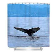 Humpback In Monterey Shower Curtain
