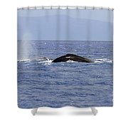 Humpback Pair Shower Curtain by Mike  Dawson