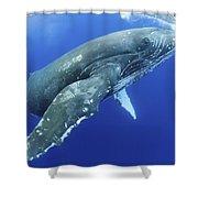 Humpback Whale Near Surface Shower Curtain