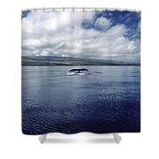 Humpback Whale Tail Slap Hawaii Shower Curtain