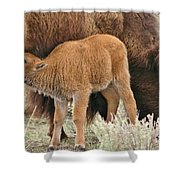 Hungry Baby Bison Shower Curtain