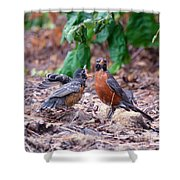 Hungry Baby Robin Shower Curtain