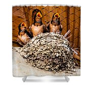 Hungry Baby Swallows - Antelope Island - Utah Shower Curtain by Gary Whitton