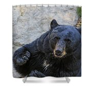 Hungry Bear Shower Curtain