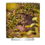 Hungry Beaver Shower Curtain