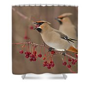Hungry Birds Shower Curtain