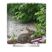 Hungry Bunny Shower Curtain